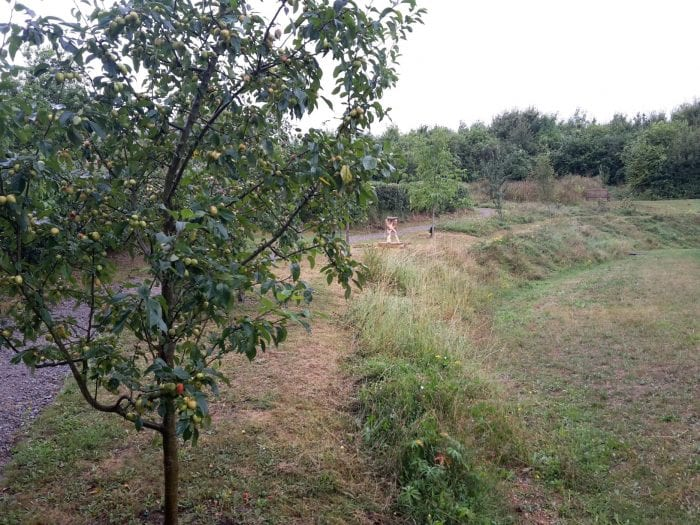 fruit tree path